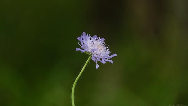 Purple Flower on green background