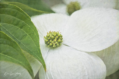 Dogwood Petals and Leaves
