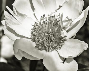 Buggy bloom, mono macro