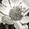 Buggy bloom, mono macro
