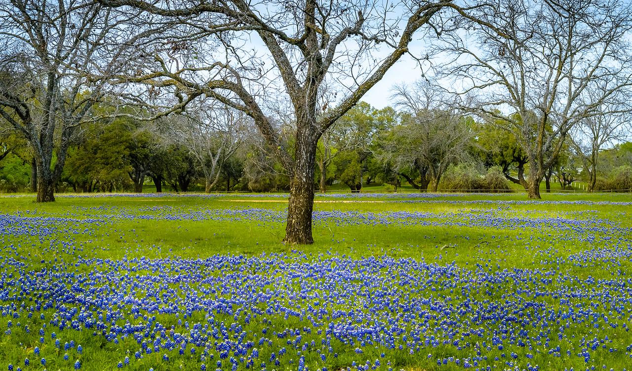 LBJ Ranch, Texas