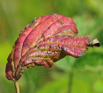 Leaf with lovely colour and bokeh
