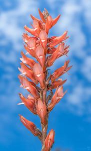 Leafless beaked ladies' tresses orchid