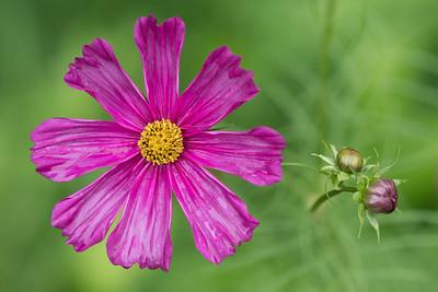 Purple flower Posed