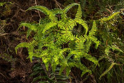 Tasmanian rain forest, Australia.