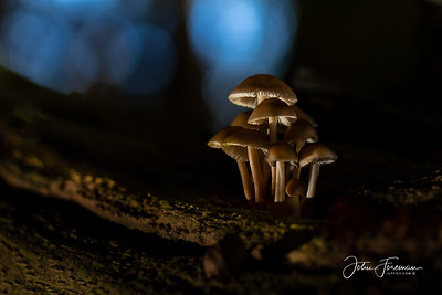 Fungi, New Forest
