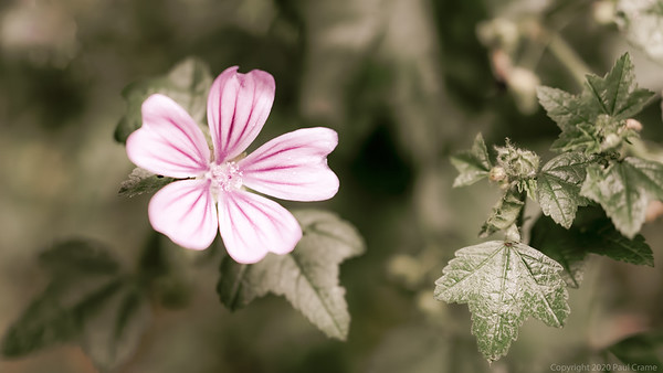 Flower with Pink