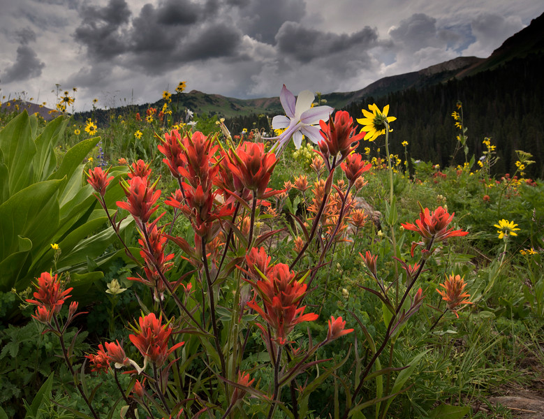 Rocky Mountain Bouquet