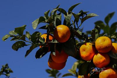Mandarins, Andalucia