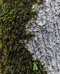 Epic epiphytes