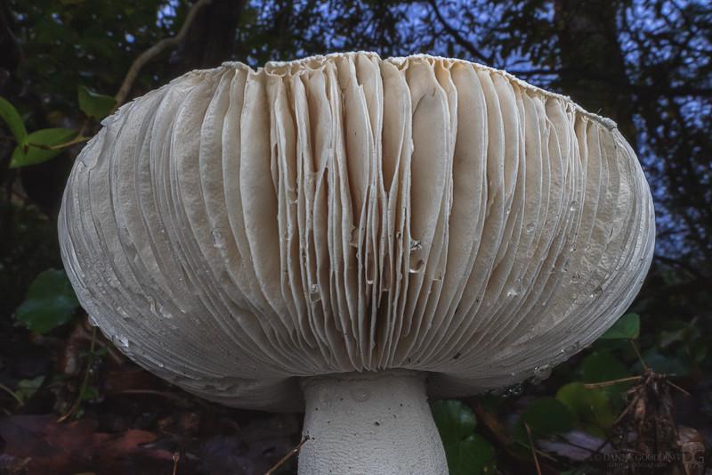 Huge upturned mushroom