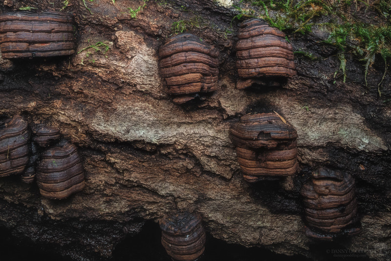 Peculiar fungus