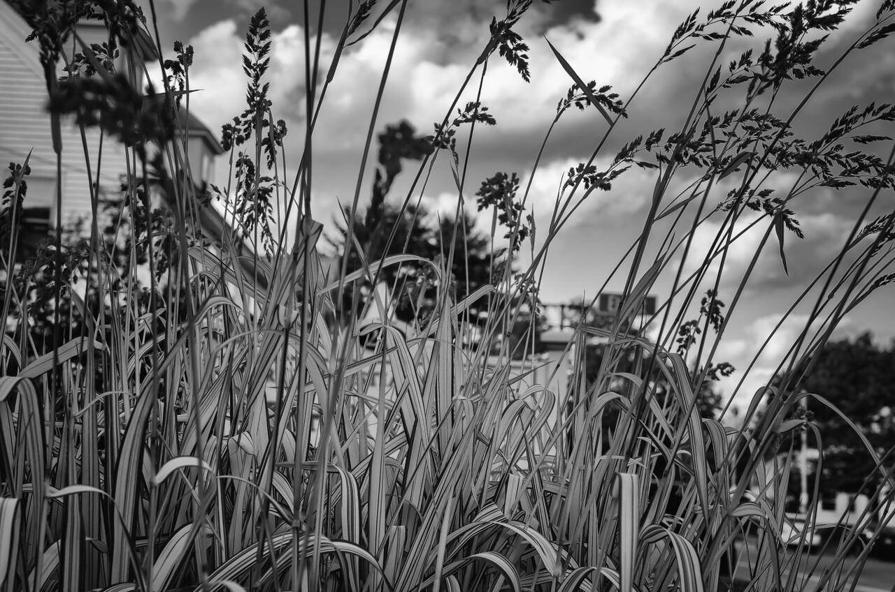 Grasses, mono