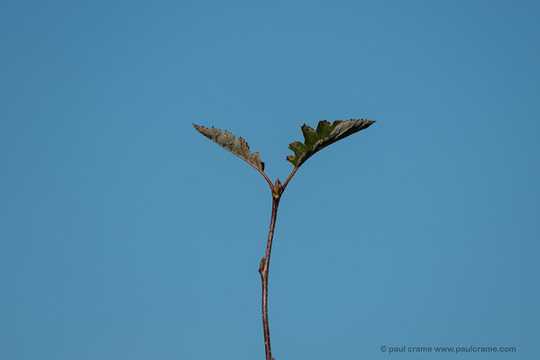 Tall Plant at Greenham Common