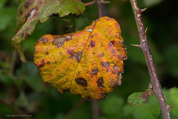 Colourful Leaf 2
