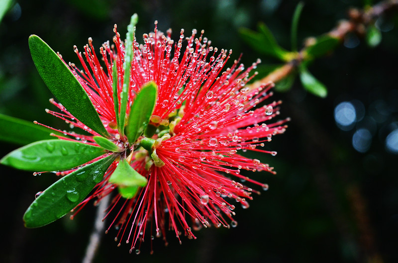 Candied Flower