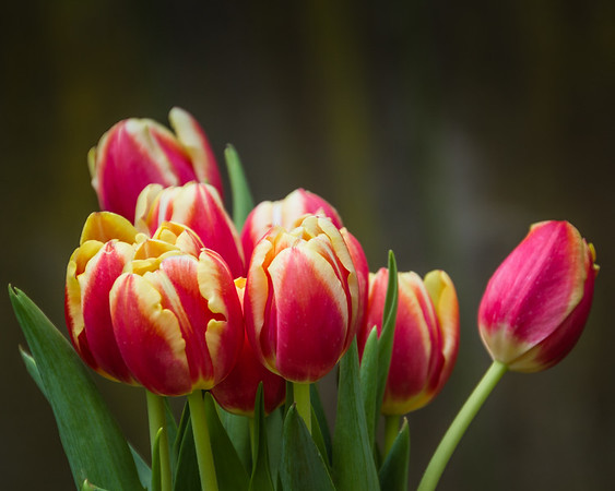 Tulips for me