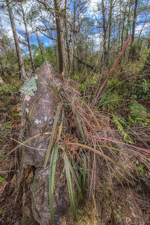 Cypress knee covered in various epiphytes