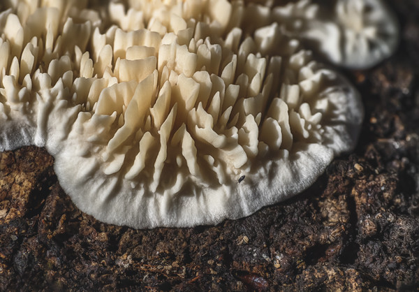 Fungus growing on a log