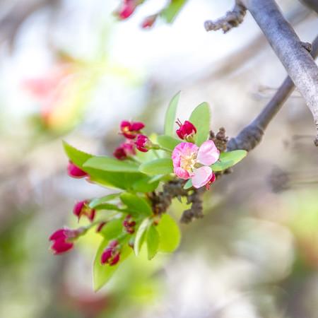 Frist bloom