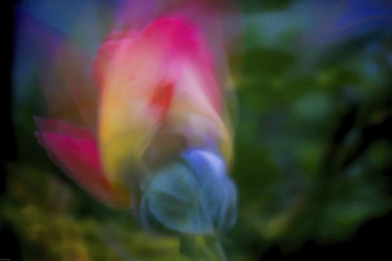 Rose-esque