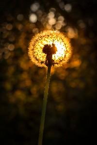Lampion v trávě