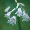 Wildflower#1