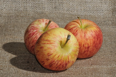 Gravenstein Apple Trio On Burlap
