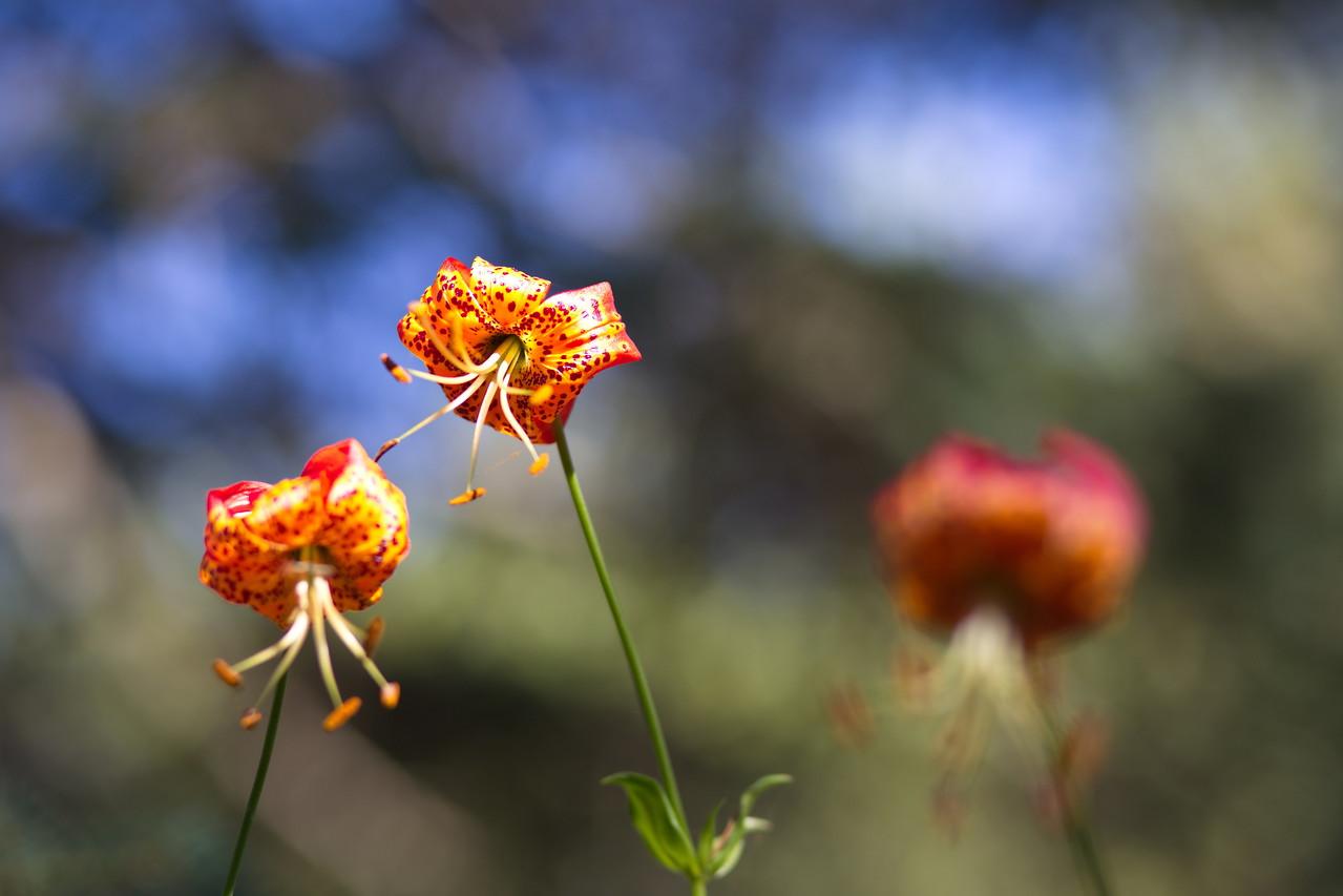 Botanical Garden in Tilden Park, Berkeley
