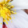 Flower Pistil