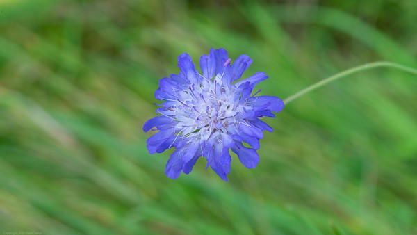 Another Blue Flower with Background 2