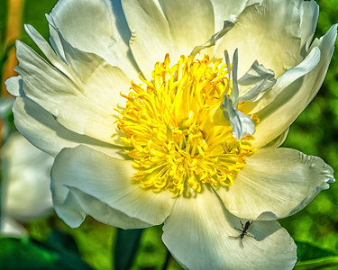 Buggy bloom, color macro