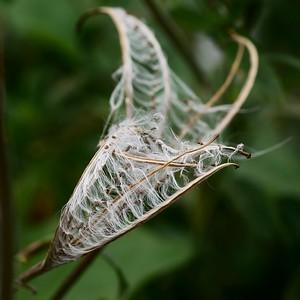 Seed Wrap