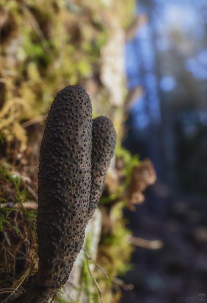 Funky fungus
