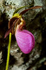 PinkLadySlippers-03