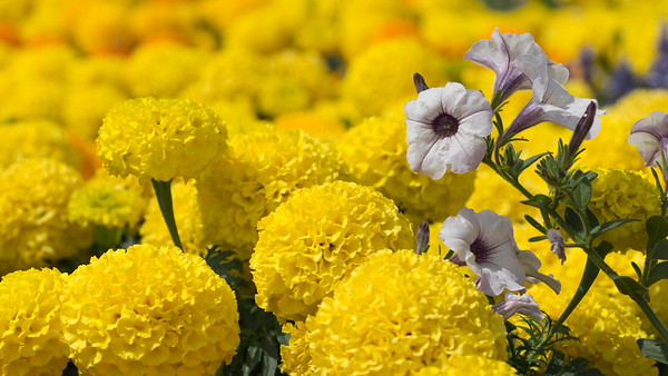 Flowers in the Flower Bed - Newbury Wharf