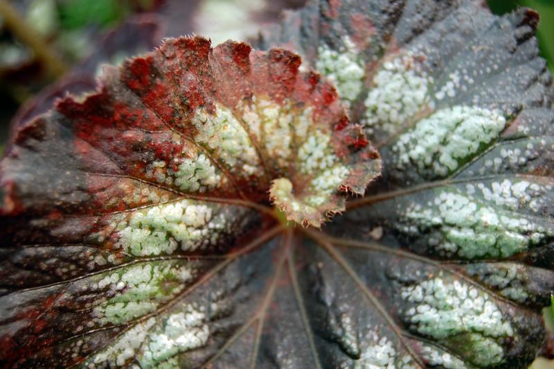Swirley Leaf