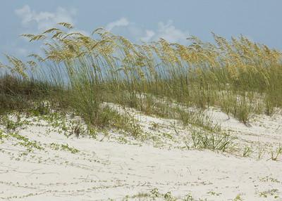 Sea oats on dune