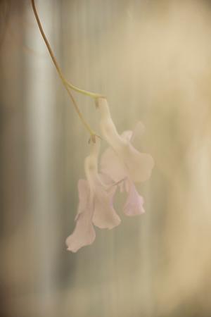 Hanging Flowers through Spanish Moss