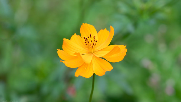 Yellow Orange Flower