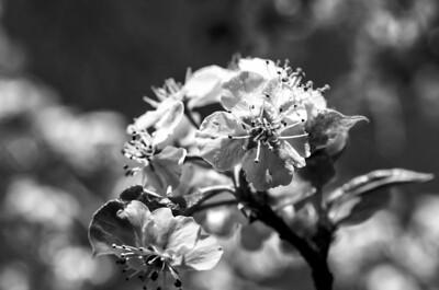 Bloom into Leaf IV