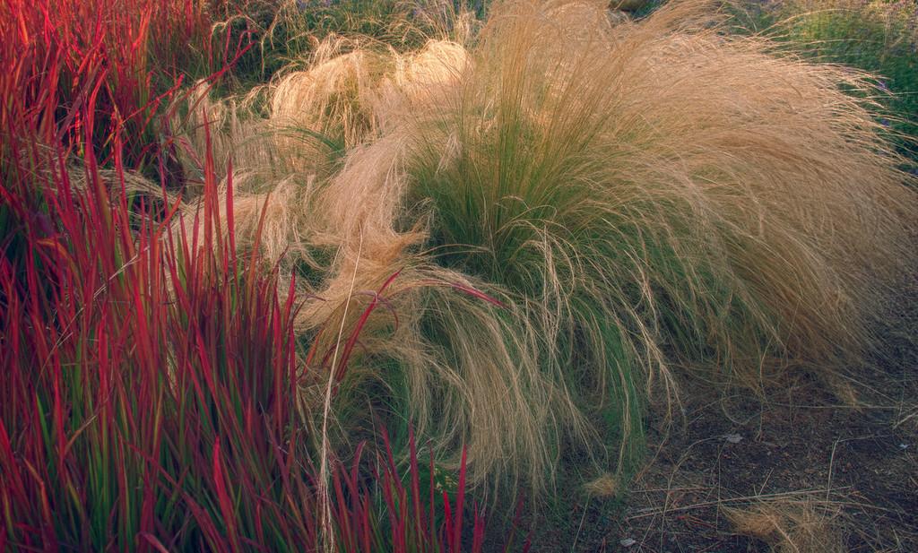 Exotic Grasses