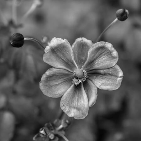Flower Blessed