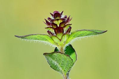 Plant Portrait