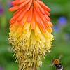 Red Hot Bumble