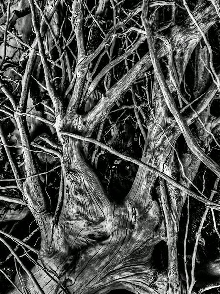 treetrunks0269_70_71-2