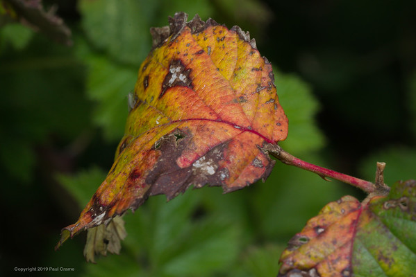 Colourful Leaf