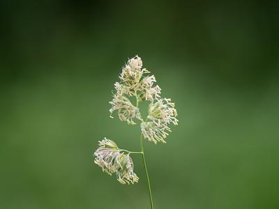 Flora 001