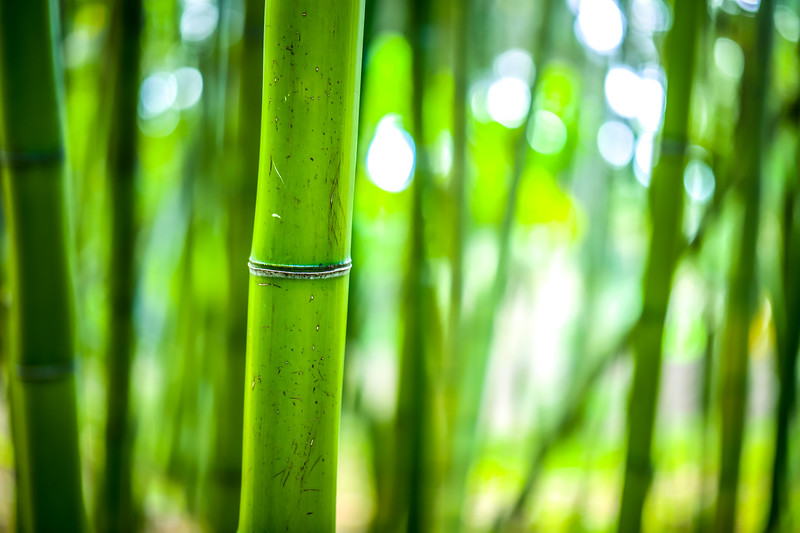 Bamboo and Bokeh