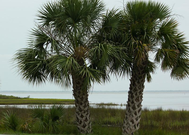 Palms on marsh edge